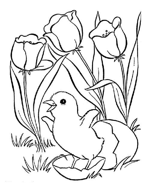 Tranh tô màu gà con bên khóm hoa