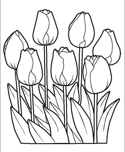 Tranh tô màu những bông hoa tulip - 1