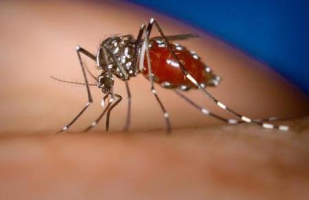 Mẹo tránh bão sốt xuất huyết cho con - 1