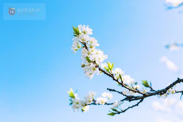 Những bông hoa tuyết ấy vừa đẹp lung linh như tuyết đầu mùa - 15