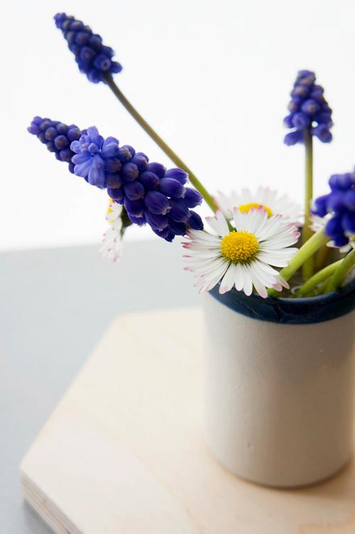 Trồng hoa chuông xanh chào xuân rực rỡ - 12