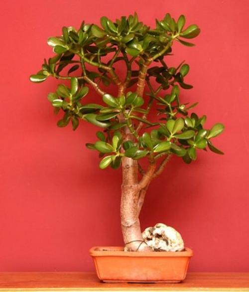 10 loại cây cảnh dễ trồng trong nhà - 2