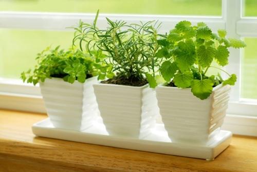 10 loại cây cảnh dễ trồng trong nhà - 4