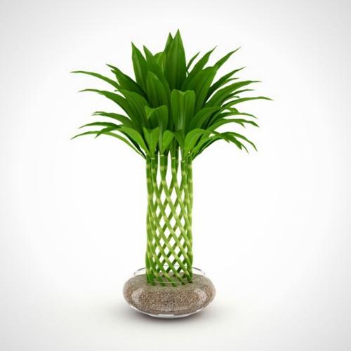 10 loại cây cảnh dễ trồng trong nhà - 8