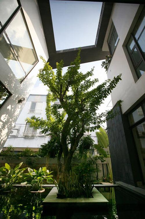 Biệt thự hà nội sừng sững cây xanh giữa nhà - 13