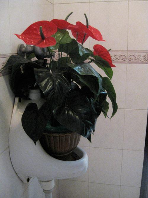 Chàng úc choáng với nhà vệ sinh kiểu việt nam - 4
