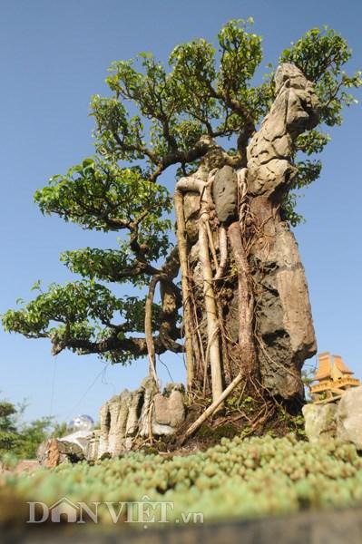 Mục kích vườn cây cảnh bạc tỷ ở nam định