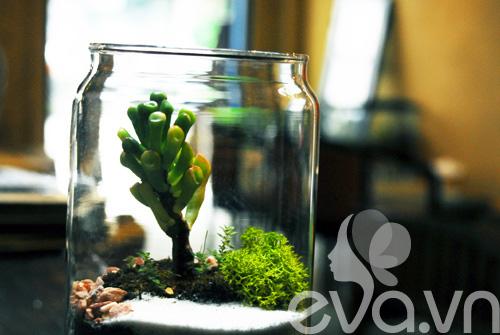 Terrarium học cách tự trồng cây trong bình kính - 2