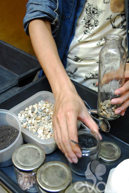 Terrarium học cách tự trồng cây trong bình kính - 6