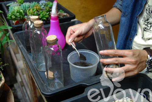 Terrarium học cách tự trồng cây trong bình kính - 7