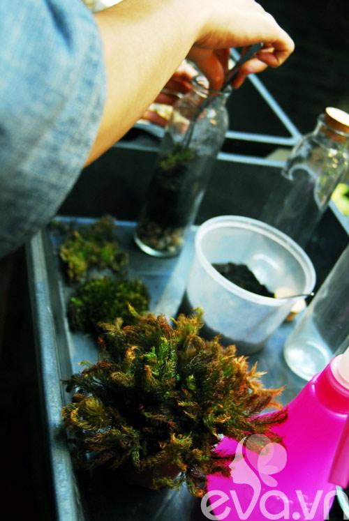 Terrarium học cách tự trồng cây trong bình kính - 9