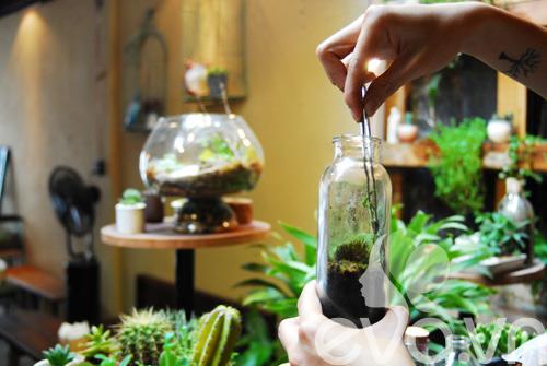 Terrarium học cách tự trồng cây trong bình kính - 10