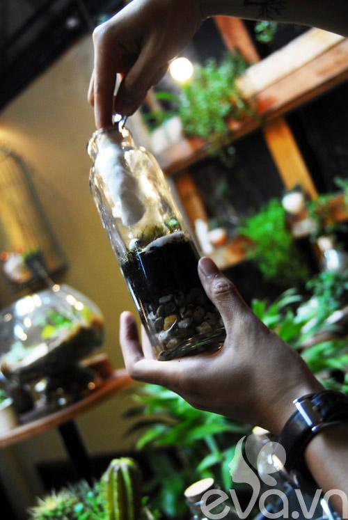 Terrarium học cách tự trồng cây trong bình kính - 12