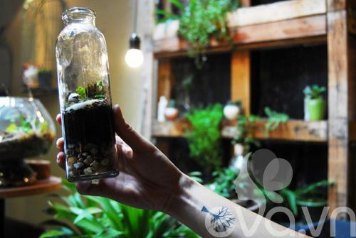 Terrarium học cách tự trồng cây trong bình kính - 13