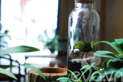 Terrarium học cách tự trồng cây trong bình kính - 14