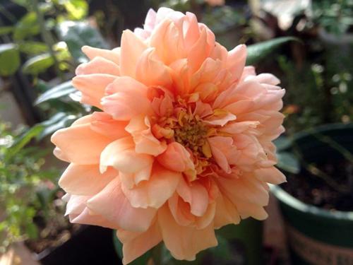 Vẻ đẹp khó cưỡng của các loại hoa hồng - 4