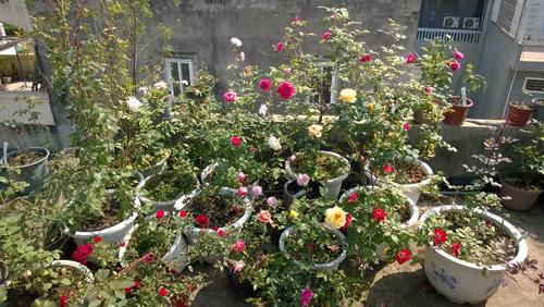 Vườn hoa trăm loại thành hình từ giấc mơ của người đàn ông - 1