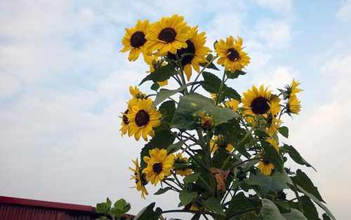 Vườn hoa trăm loại thành hình từ giấc mơ của người đàn ông - 4