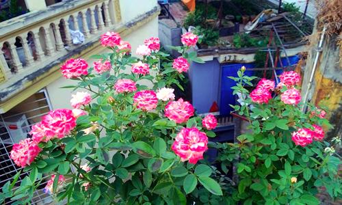 Vườn hoa trăm loại thành hình từ giấc mơ của người đàn ông - 8