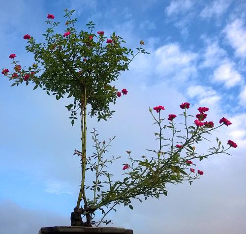 Vườn hoa trăm loại thành hình từ giấc mơ của người đàn ông - 9