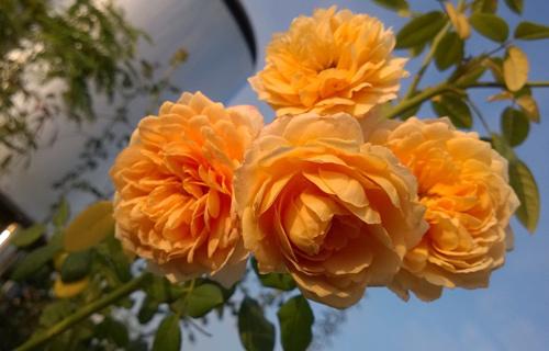 Vườn hoa trăm loại thành hình từ giấc mơ của người đàn ông - 10