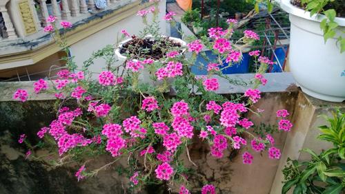 Vườn hoa trăm loại thành hình từ giấc mơ của người đàn ông - 12
