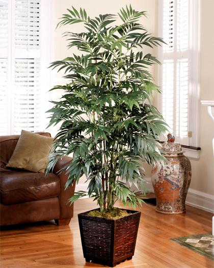 Các loại cây cảnh lớn trồng trong nhà vẫn xanh tốt - 4