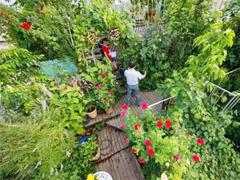 Các loại cây cảnh lớn trồng trong nhà vẫn xanh tốt - 9