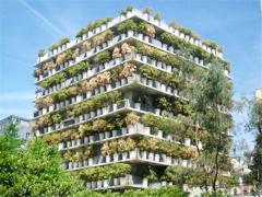 Các loại cây cảnh lớn trồng trong nhà vẫn xanh tốt - 10