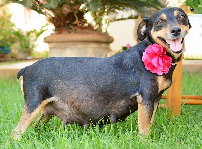 Bộ ảnh nàng chó mang bầu hot nhất mạng xã hội - 1