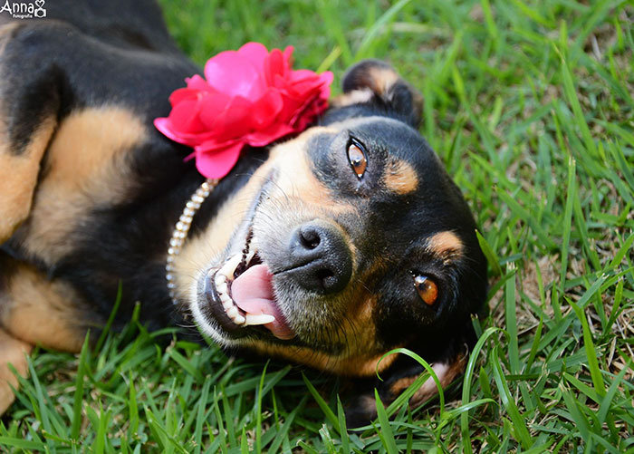 Bộ ảnh nàng chó mang bầu hot nhất mạng xã hội - 2