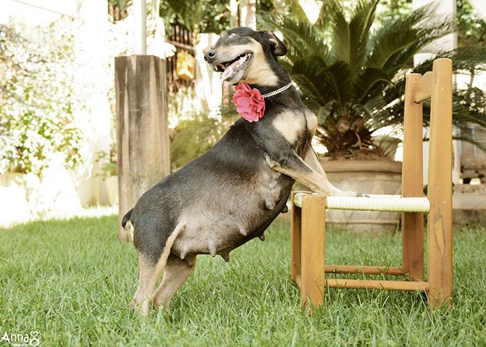 Bộ ảnh nàng chó mang bầu hot nhất mạng xã hội - 4