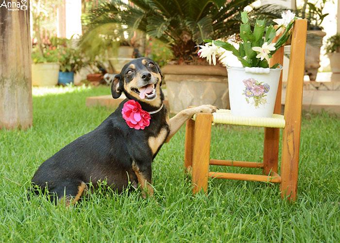 Bộ ảnh nàng chó mang bầu hot nhất mạng xã hội - 5