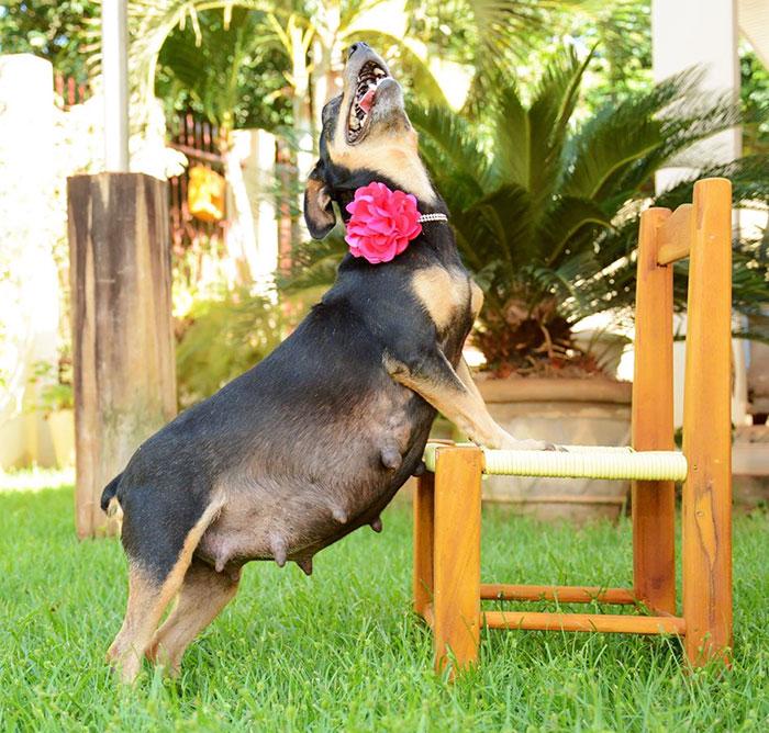 Bộ ảnh nàng chó mang bầu hot nhất mạng xã hội - 7