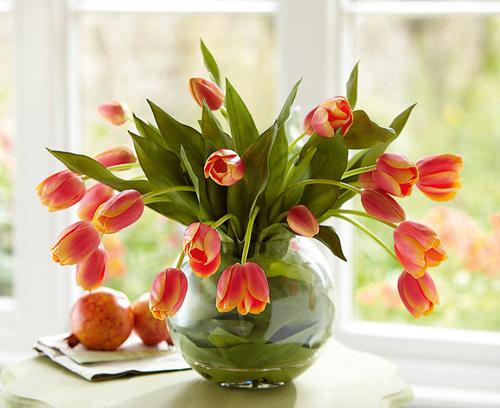 Đủ kiểu cắm hoa tulip dễ nhưng đẹp sang trọng - 2