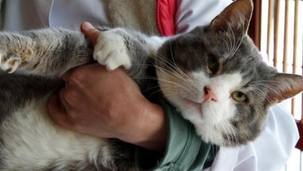 Những siêu sao giảm cân trong thế giới chó mèo - 10